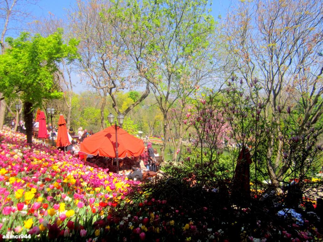 Emirgan Korusu ve Lale Festivali