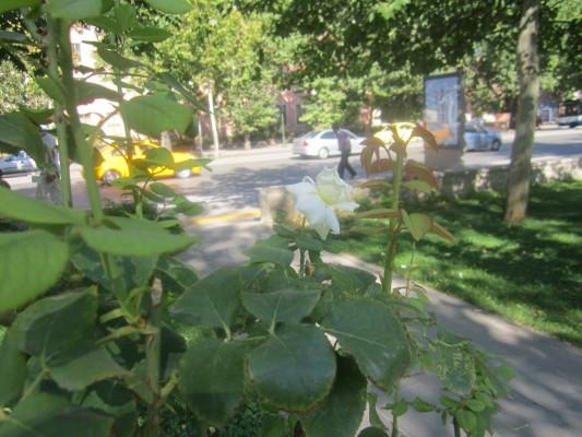 Cumhuriyet Parkı Ankara 34